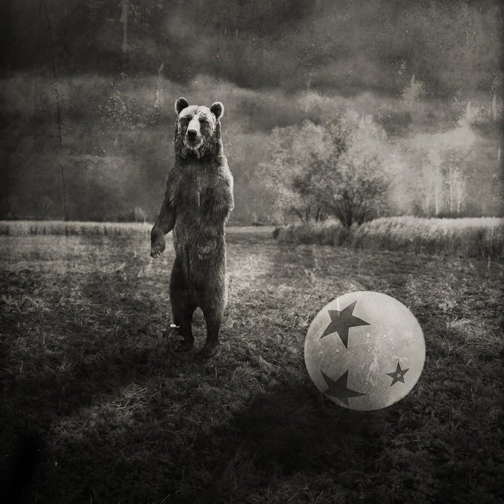 (Animaly 07 - Krzysztof Wladyka)